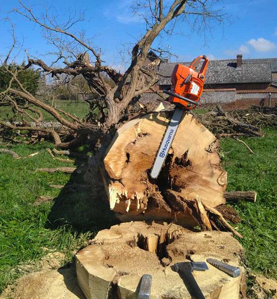 abattage-arbre-picardie