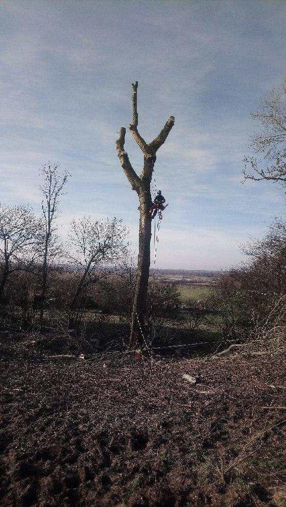 abattage arbre aisne