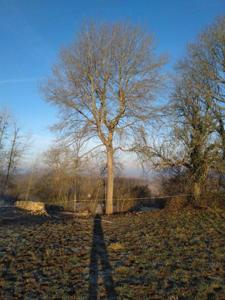 abattage arbre aisne3