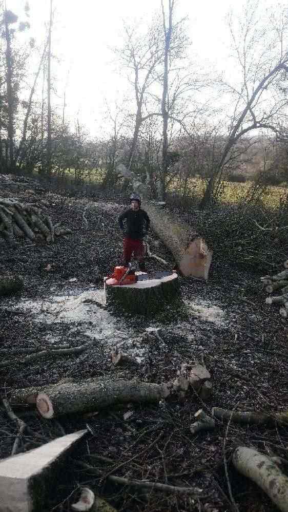 abattage arbre aisne4