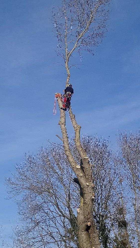 abattage arbre aisne6