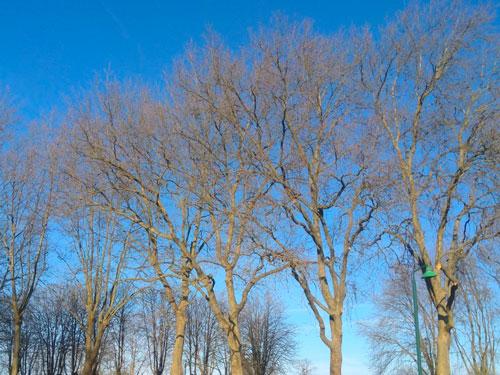 taille arbre picardie